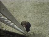 Классический Доктор Кто - 9 сезон 5 серия - Временной монстр (1\6) (20 мая - 24 июня 1972)